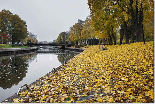 Salonjoki